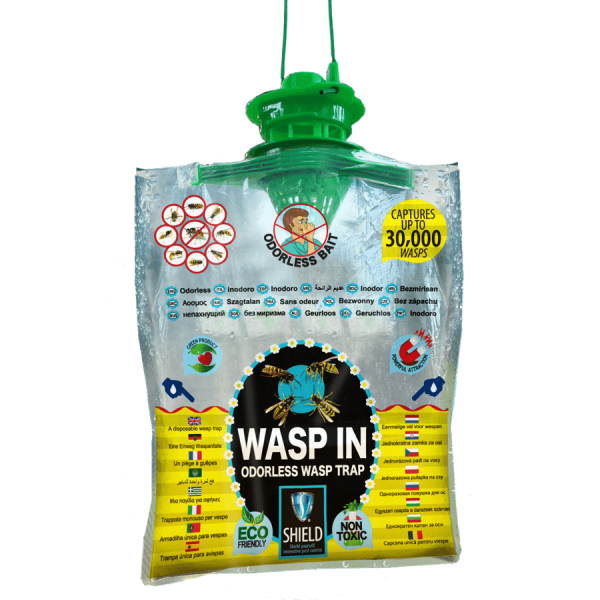 wasp in odorless wasp trap